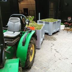 Kasser med druer foran vineriet