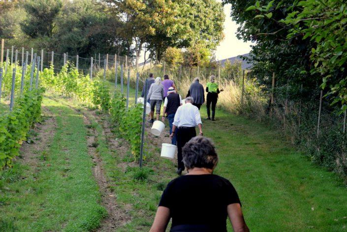På vej til høst i marken