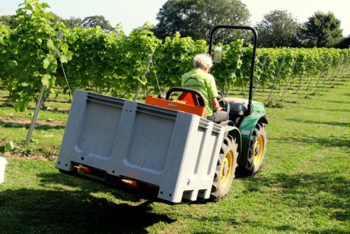 Druerne på vej til vineriet