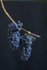 Leon Millot-druer