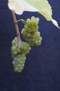 Solaris-druer