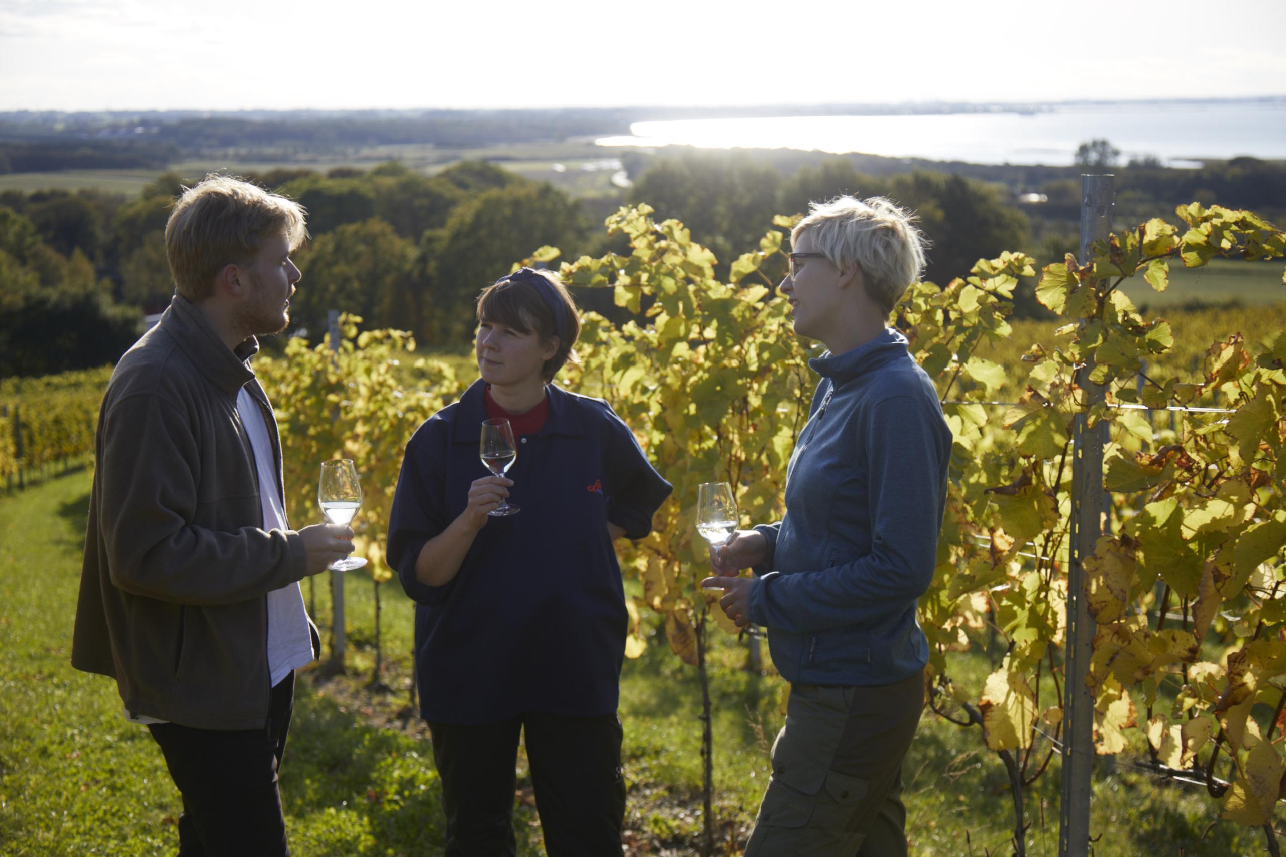 Besøgende drikker vin i vinmarken